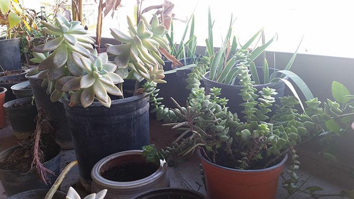 Different succulents