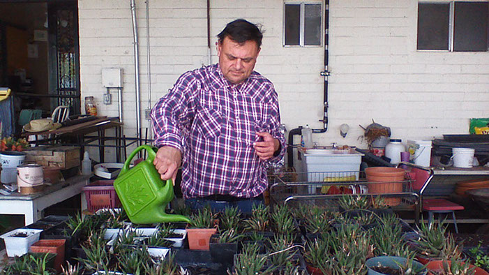 Watering plants at Nayo's Plant Nursery