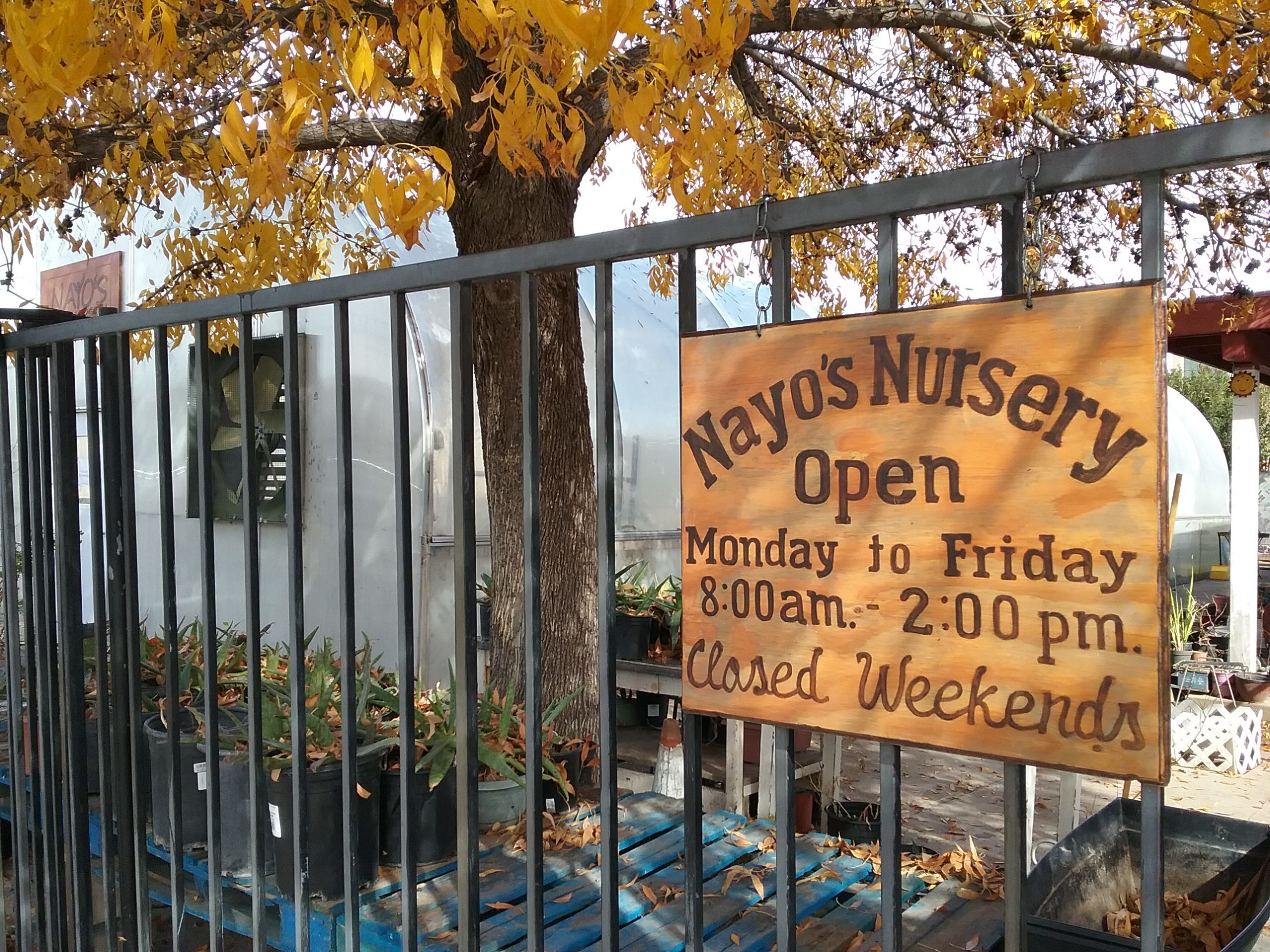 Nayo's Nursery, open Monday to ?Friday from 8am to 2pm, closed weekends