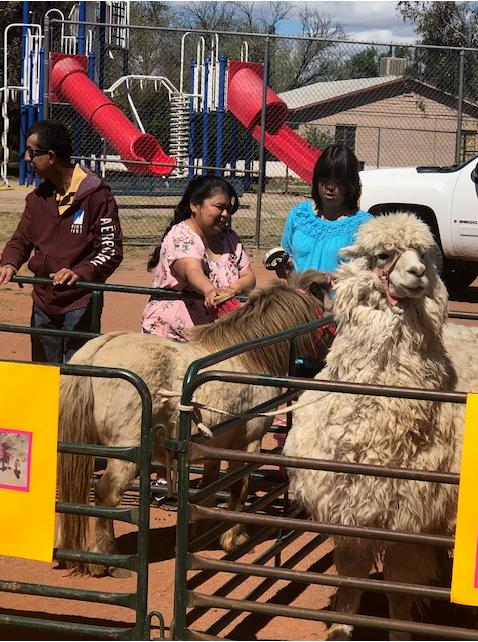 Petting llamas